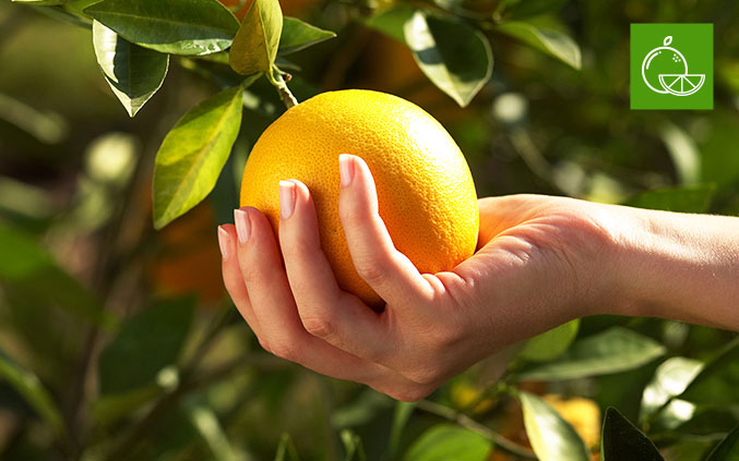 A DAY IN THE LIFE OF A CITRUS FARMER