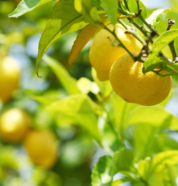 Importance of the land in citrus fruits production