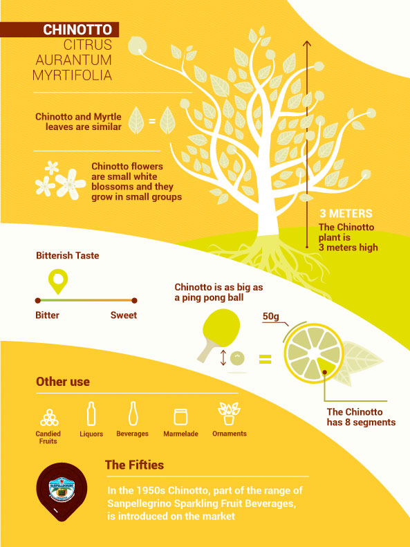 learn about chinotto citrus fruit